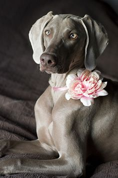 Sophisticated pooch ✿⊱╮