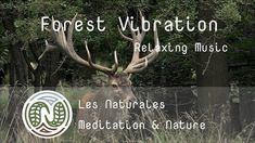 Music Meditation Nature Deep Relaxation Poetry. The Naturales exfiltrate us from stress by connecting  to the real Earth, without special effects. #relaxation #detente #meditation #nature #bienetre #mieuxdormir #forest #deer Deep Relaxation, Meditation Music, Relaxing Music, Special Effects, In A Heartbeat, Serenity, Deer, Connection, Poetry