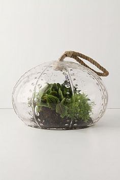 Urchin Terrarium: Maybe I could manage to keep a plant alive if it stayed under glass.