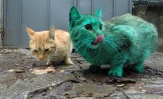 So, there has been a green cat walking around the streets of Varna, Bulgaria, this week.   This Cat Accidentally Turned Himself Turquoise And It's Actually Really Pretty