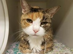 ***TO BE DESTROYED 08/31/17***CARMELA A1123390