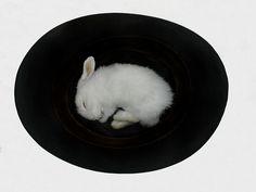 After Death, Still Life | by Polly Morgan, Fine Art Taxidermy
