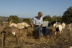 Man using laptop in field with goats - Phil Fisk/Oxford Scientific/Getty Images