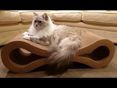 Ragdoll Cats Scratch Karma Products Infinity Cat Scratcher  - ねこ - ラグドール - Floppycats
