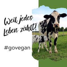 #veganquote #oinkvegan #vegandeutschland #tierliebe #tierschutz #veganleben #veganessen #veganwerdenwaslosdigga #vegangermany #instavegan Cow, Instagram, Animals, Vegane Rezepte, Animal Welfare, Heart, Quotes, Animales, Animaux