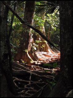 Taman Negara Jungle, Malaysia. De oudste jungle ter wereld en een van de mooiste plekken waar ik ooit geweest ben.