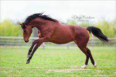 Tersk horse by Olesya  Nickolaeva on 500px
