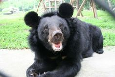 Animals Asia is devoted to ending the barbaric practice of bear bile farming and improving the welfare of animals in China and Vietnam. We promote compassion and respect for all animals and work to bring about long-term change.