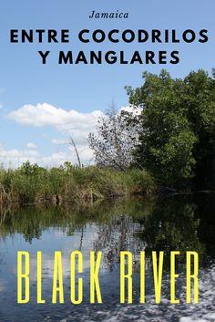 Si van a Jamaica, no dejen de hacer esta excursión por el Black River, es una experiencia inolvidable. Jamaica, Bowrider, Crocodiles, Caribbean, Negril Jamaica