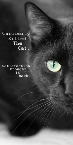 Curiosity Killed the Cat. Satisfaction Brought It Back.