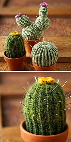 Creative Ideas For Your DIY Cactus | Home Design And Interior