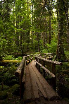 trail bridge by cassandra.stemler, via Flickr