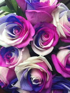 Beautiful Flowers Wallpapers, Beautiful Rose Flowers, Beautiful Nature Wallpaper, Pretty Wallpapers, Purple Flowers, Flower Phone Wallpaper, Flower Wallpaper, Facebook Cover Photos Flowers, Rainbow Roses