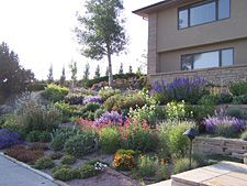 xeriscaping:  This is what Xeriscaping means. It is not just boring rock. It can be incredibly beautiful, low water use, low maintenance. It just takes planning ahead and common sense with a little imagination.