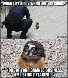 That's Racist #owl #police #cop  #meme #epic #lol #crazy #fun #instafun #witty #comedy #comedyshow #comedian #igcomedy #comedypics #comedyposts #comedia #comedylife #sketchcomedy
