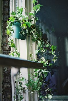 hanging ivy -:-:-:- when we move this year I want to buy some hanging pots for the kitchen.