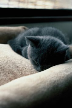 I couldn't help but sing.... Soft kitty, Warm kitty, Little ball of fur. Happy kitty, Sleepy kitty, Purr, purr, purr.