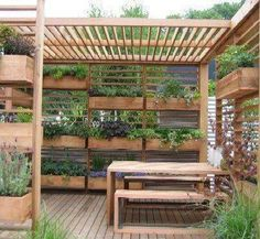 vertical garden pergola: edible landscaping on your patio