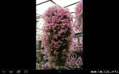 Orquideas maravilnosas