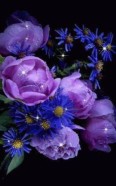 Discover & share this Animated GIF with everyone you know. GIPHY is how you search, share, discover, and create GIFs. Beautiful Flowers Images, Beautiful Gif, Flower Images, Beautiful Roses, Pretty Flowers, Purple Flowers, Flower Art, Purple Love, All Things Purple