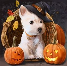 Watch these adorable puppies enjoying changing of seasons and their favorite holiday--HALLOWEEN! Does your dog love Halloween as much as these cute pups? Chien Halloween, Fröhliches Halloween, Halloween Pictures, Spirit Halloween, Halloween Pumpkins, Animals And Pets, Baby Animals, Cute Animals, Funny Animals