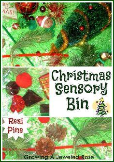 A festive Christmas sensory bin- scented with the aromas of the season!