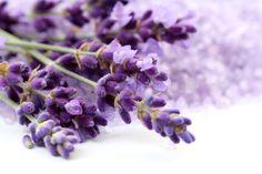 Lavender seeds organic non gmo garden flower by Magicgreekgarden, €0.80
