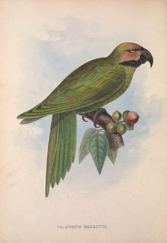 1849: Zoologia typica; or, Figures of new and rare animals and birds