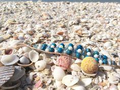 Sea Urchins By The Hundreds On Sanibel Island Florida