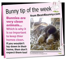 Bunny tip - Bunnies are very clean animals & they love their home to be very clean too