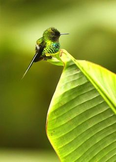 How absolutely adorable this cute, little hummingbird is!!!