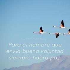 Para el hombre que envía buena voluntad siempre habrá PAZ. #vidasana #armonia #conscienciaespiritual #frasesdelavida #frasesenespañol #pazinterior #vivefeliz #reflexion #tpae #flaying #birds #sky #blue #nature