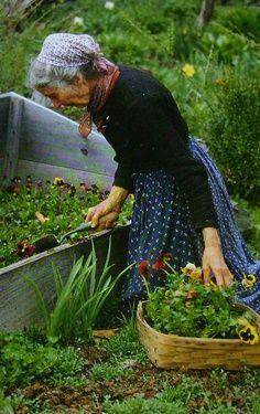 Tasha digging out pansies