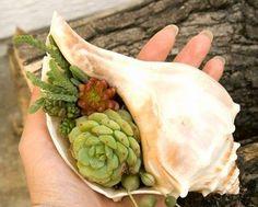 25 Indoor Succulent DIY Project Ideas----Sea shell Succulent Design Idea