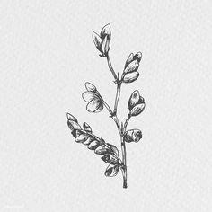 Hand drawn flower branch vector   premium image by rawpixel.com / Te Penguin Illustration, Plant Illustration, Branch Vector, Christmas Plants, Plant Vector, Free Hand Drawing, Hand Drawn Flowers, Flower Branch, Beige Background