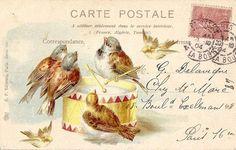 1904 Birds Postcard ~ Todo transfer (pág. 210) | Aprender manualidades es facilisimo.com