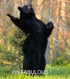 Yeah yeah i'm fabulous this reminds me of dakota