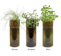 Indoor Herb Garden Kit, Wine Bottle Planter - Would like to try to cut my own bottles to make these. Wine Bottle Planter, Recycled Wine Bottles, Wine Bottle Crafts, Bottle Art, Bottle Garden, Beer Bottle, Hydroponic Herb Garden, Herb Garden Kit, Hydroponics