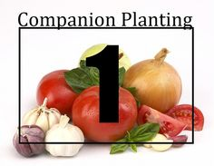 Companion Planting Made Easy-ish: Part 1 of 3