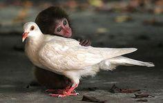 Amizades improváveis