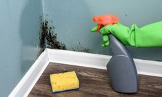Buy Spray bottle and sponge near black mould wall by ivankmit on PhotoDune. Spray bottle and sponge near black mould wall. Bottle Cleaner, Spray Bottle, Clean House, Plastic Cutting Board, Photo Wall, Cleaning, Stock Photos, Photographs, Facebook