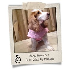 Amigos de Margoff #Haute #Couture for #Pets #Margoff #Dogs #Fashion #Pink