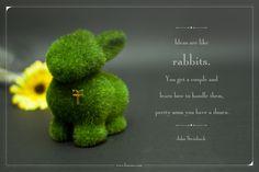 Ideas are like rabbits #ideas #rabbits #furama