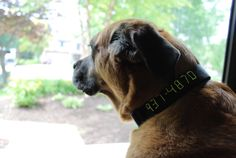 Embroider your phone number onto your pet's collar so if he gets lost and his tag falls off, people can still call.