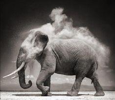 Mesmerizing photo of an elephant.