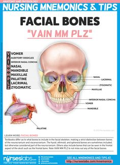 Others also include bones that can be seen in the frontal aspect of the skull such as the frontal bone. Note VAIN MM PLZ so you don't miss out any of the facial bones. For more nursing mnemonics, vi Nursing School Tips, Nursing Tips, Nursing Notes, Nursing Schools, Ob Nursing, Facial Bones, Nursing Mnemonics, Pharmacology Mnemonics, Human Anatomy And Physiology