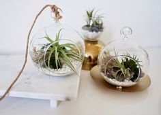 How to make an indoor garden terrarium with air plants. So easy! Air Plant Terrarium, Garden Terrarium, Air Plants, Indoor Plants, Diy Gifts To Make, How To Make, Bug Spray Recipe, Shabby Chic Crafts, Just Dream