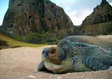 http://www.brasil.gov.br/meio-ambiente/2015/06/populacao-de-tartarugas-aumenta-86,7-em-cinco-anos