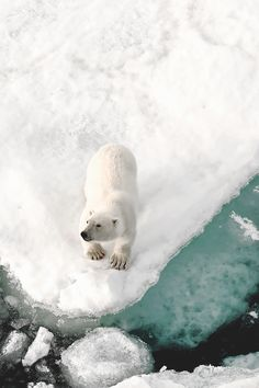 Every year global warming and human pollution take a toll on polar bears and other wildlife that soon will be irreversible. All countries need to step up to the plate and take action NOW!