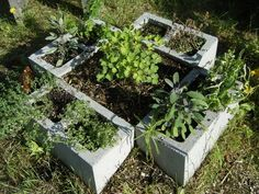 Cinder block herb garden. keeps the spreading to a minimum. Cheap way to make an herb garden. You can paint the bricks too to make them look nicer.
